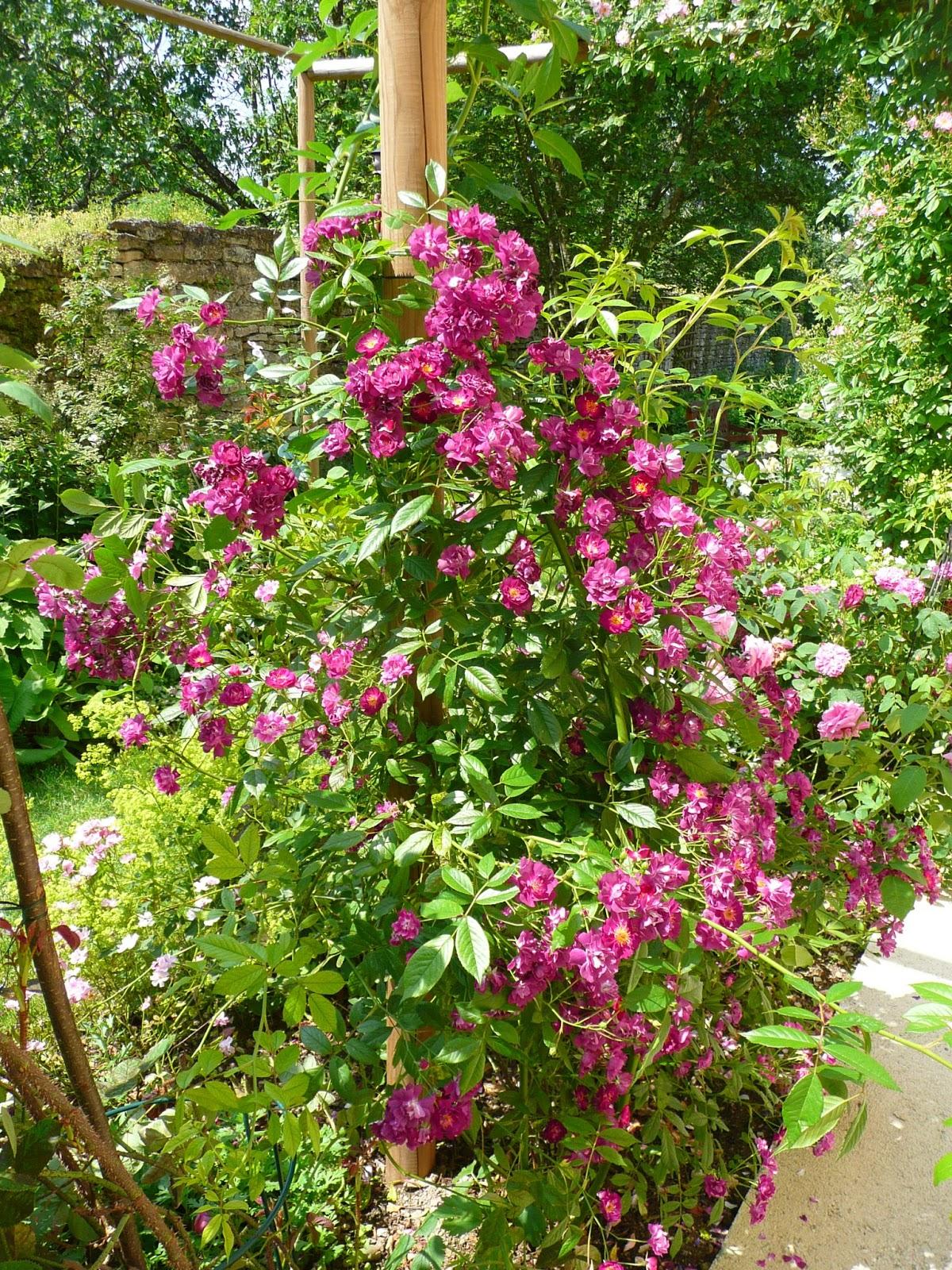 Notre jardin secret finitions et petites floraisons for Jardin secret 78