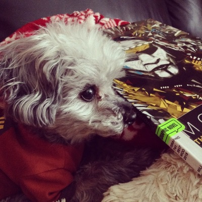 Murchie lays partly on and partly off his sheep-shaped pillow. He wears his orange t-shirt and has his ears perked. Beside him, overlapping his paws, is a trade paperback copy of Moonshot, featuring a painting of a man in white and black face paint. Yellow, white, and black shards surround him.
