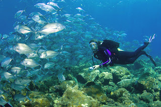 NUSA LEMBONGAN DIVING SPOT