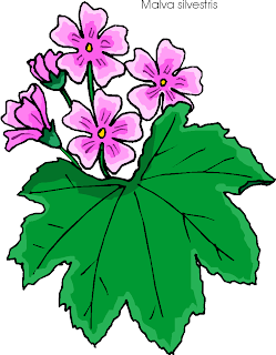 Malva Sylvestris | Common Mallow Free Clipart