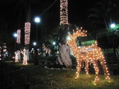 Parque con un reno adornado de luces tambien los arboles