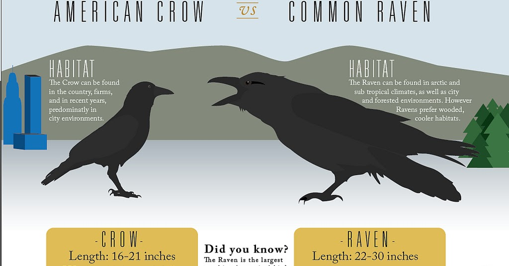 Thanks Katrina Interesting Ravens Vs Crows - Bird Map Of The Us Crows