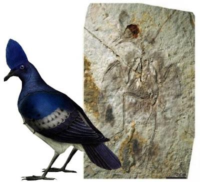 aves primitivas Hongshanornis