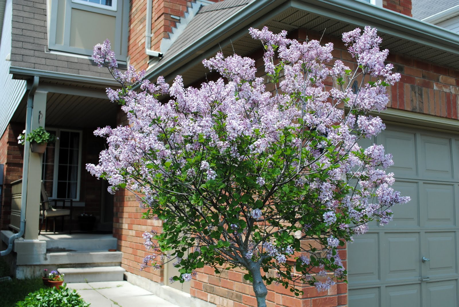 It is time to update our home's curb appeal! Curb appeal plays a large role ...