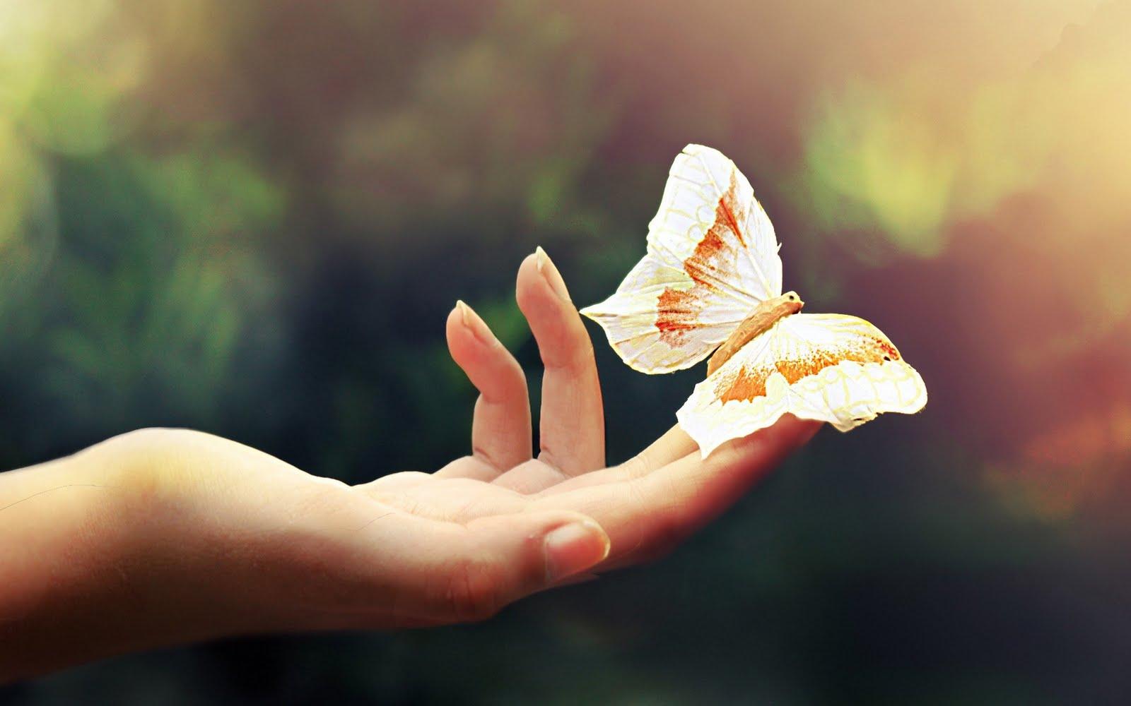 Butterfly [Wallpaper] ~ *quot;MaStiquot;*