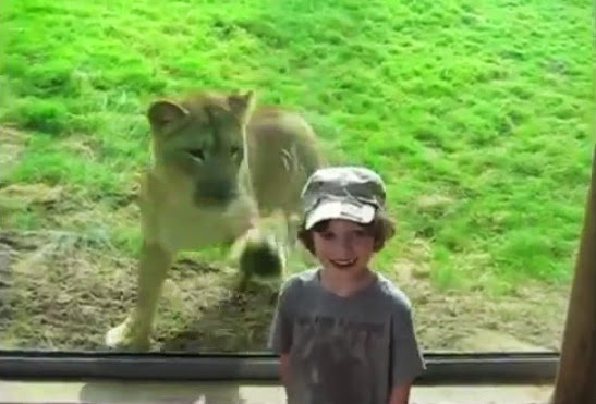 http://funkidos.com/videos-collection/funny-videos/funny-animal-attack-compilations