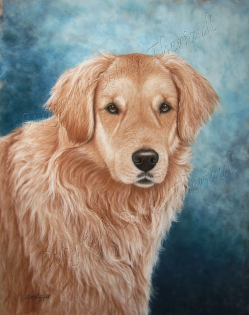 Golden Retriever dog painting portrait in pastel by Colette Theriault
