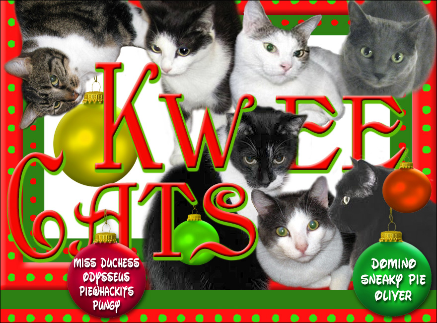 Kwee Cats