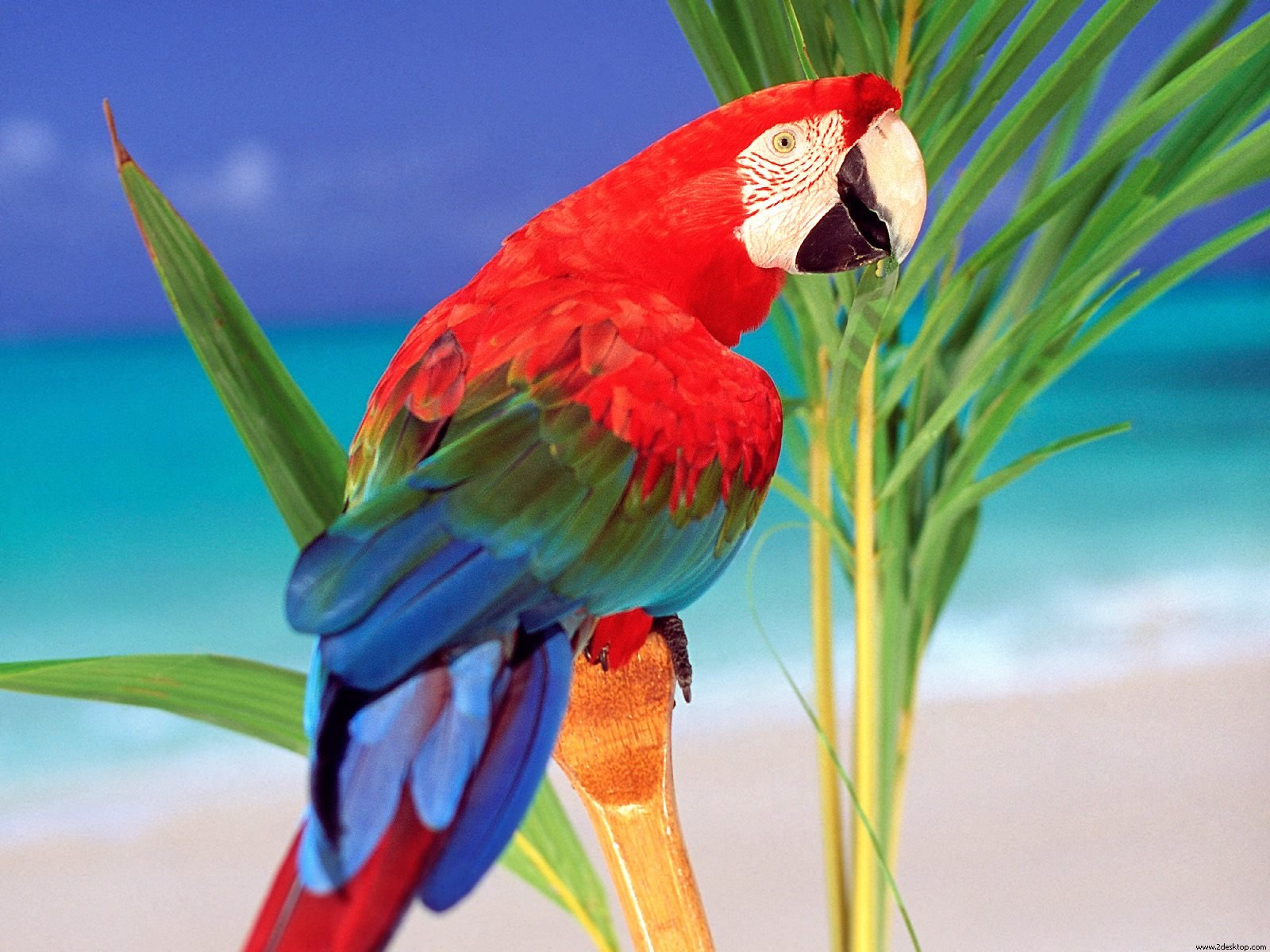 tropical colors parrot wallpapers - Tropical Colors Parrot Wallpapers HD Wallpapers