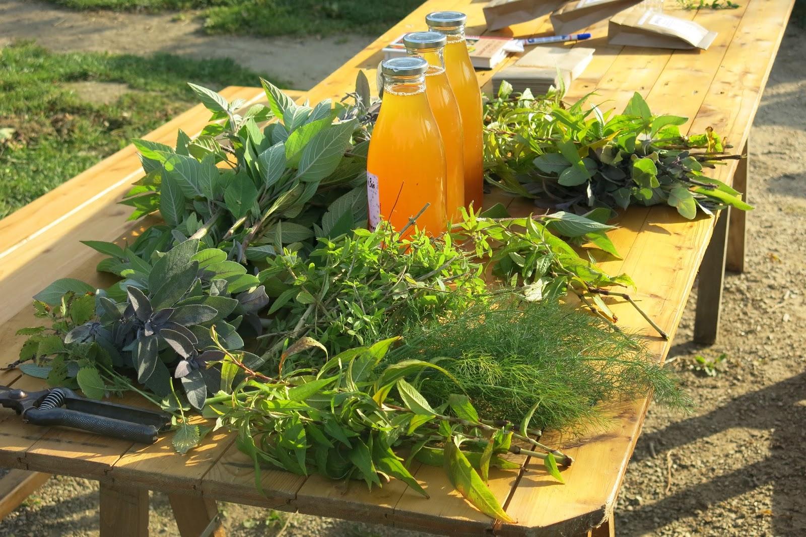 Ulamir centre social du goyen les jardins solidaires for 6 jardin guillaume bouzignac