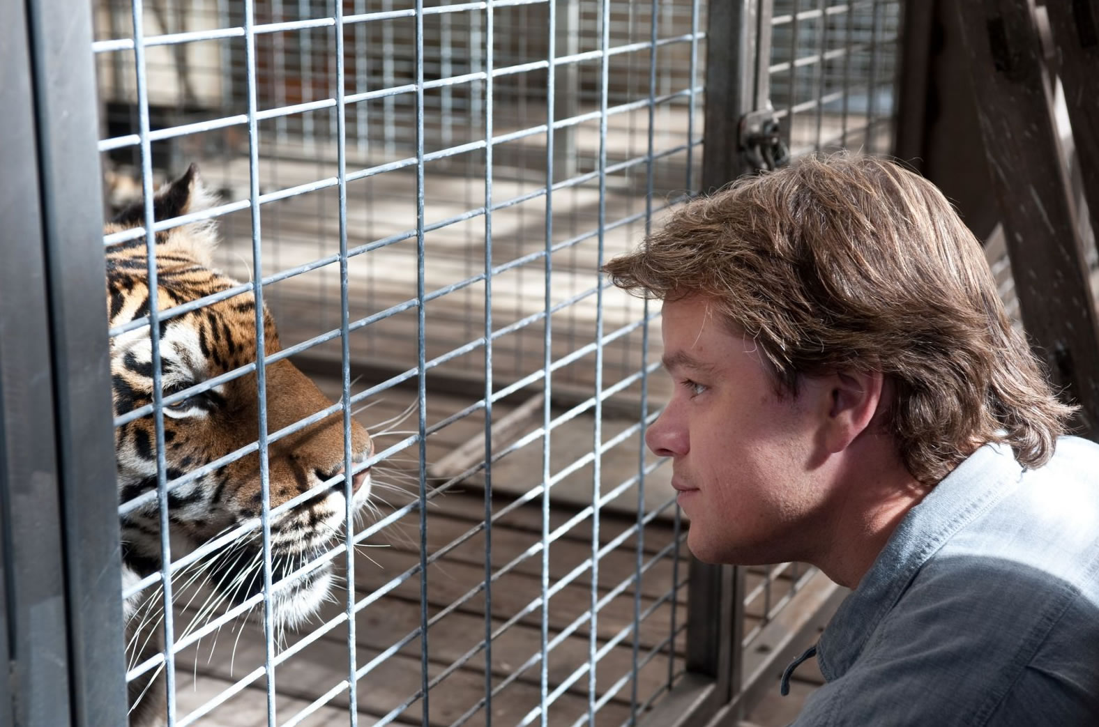 http://3.bp.blogspot.com/-CBHqEJCZmOA/T7asea04tOI/AAAAAAAAA1k/g3VOy6jkkE8/s1600/we-bought-a-zoo-movie-image-matt-damon-tiger-01.jpg