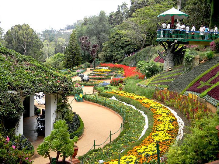 Ooty Flower Show - 2012 Latest News