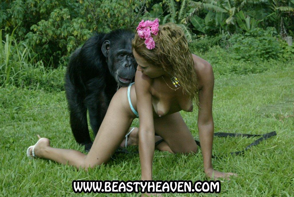 телку трахнула шимпанзе