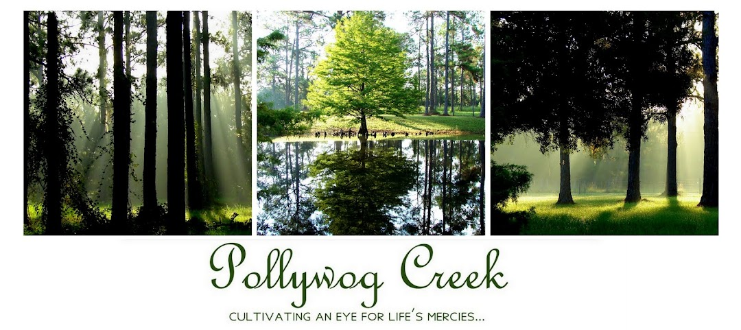 Pollywog Creek
