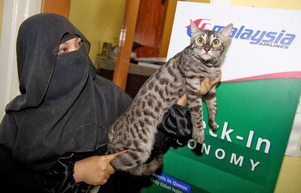 Beli Kucing Dengan Harga Rm100 000