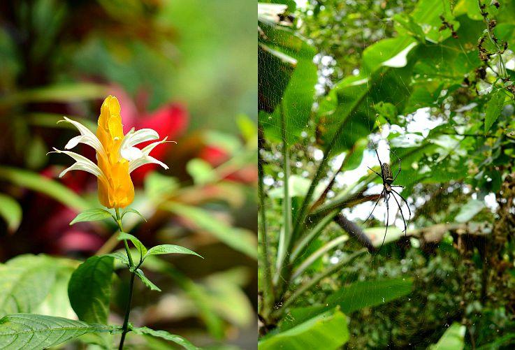 Gitgit waterfalls, Spider, Bali, Indonesia