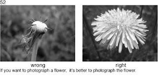 Совет 52. Когда вы хотите сделать снимки цветов, то снимайте все таки цветы