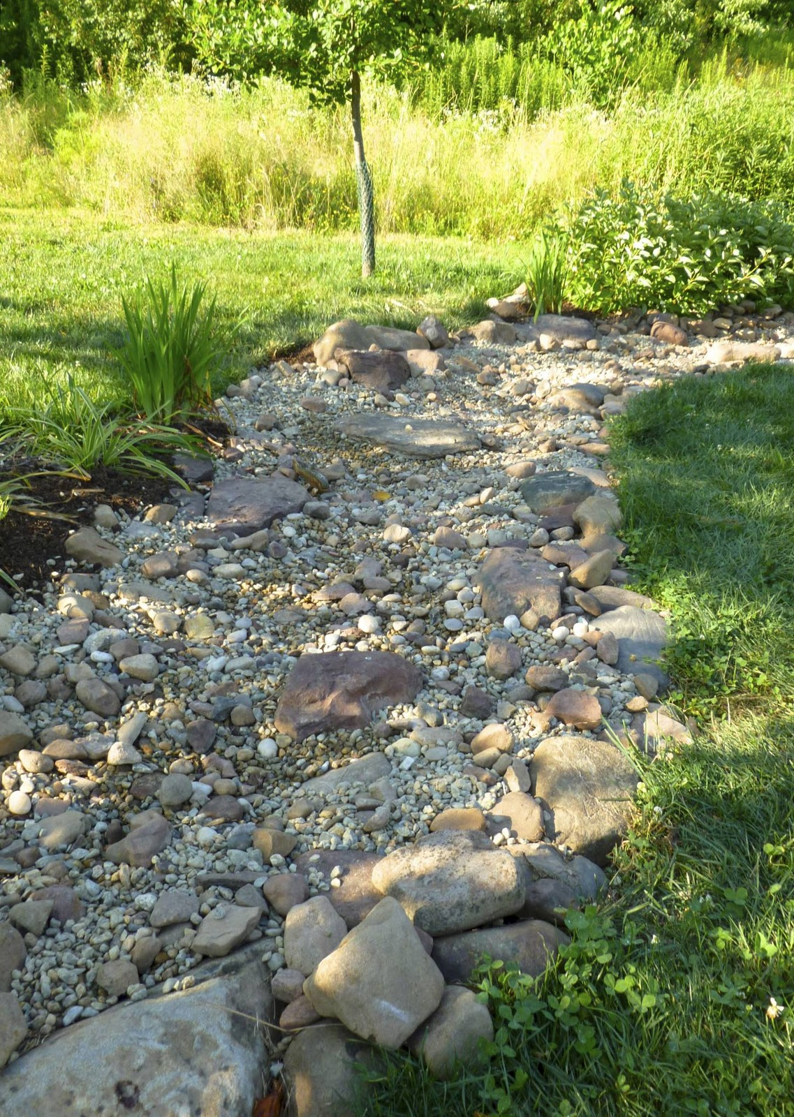 Plant Inventory Dry Creekbed