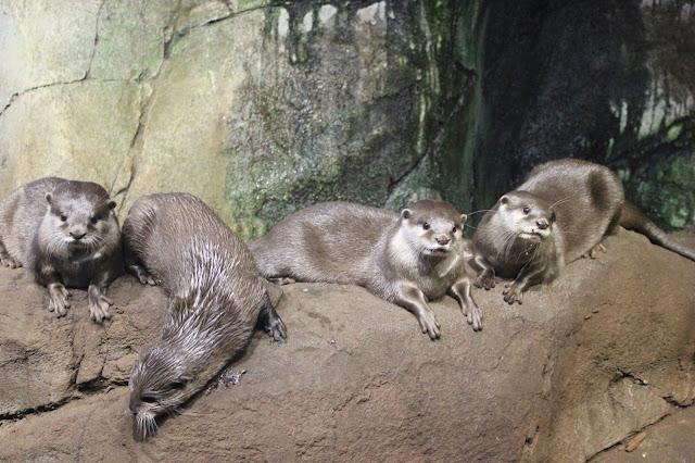 georgina-minter-brown-georgie-frequencies-holiday-bournemouth-birthday-trip-sea-coast-ocean-oceanarium-aquarium-otter