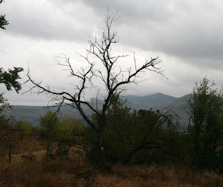 Dead tree to be removed