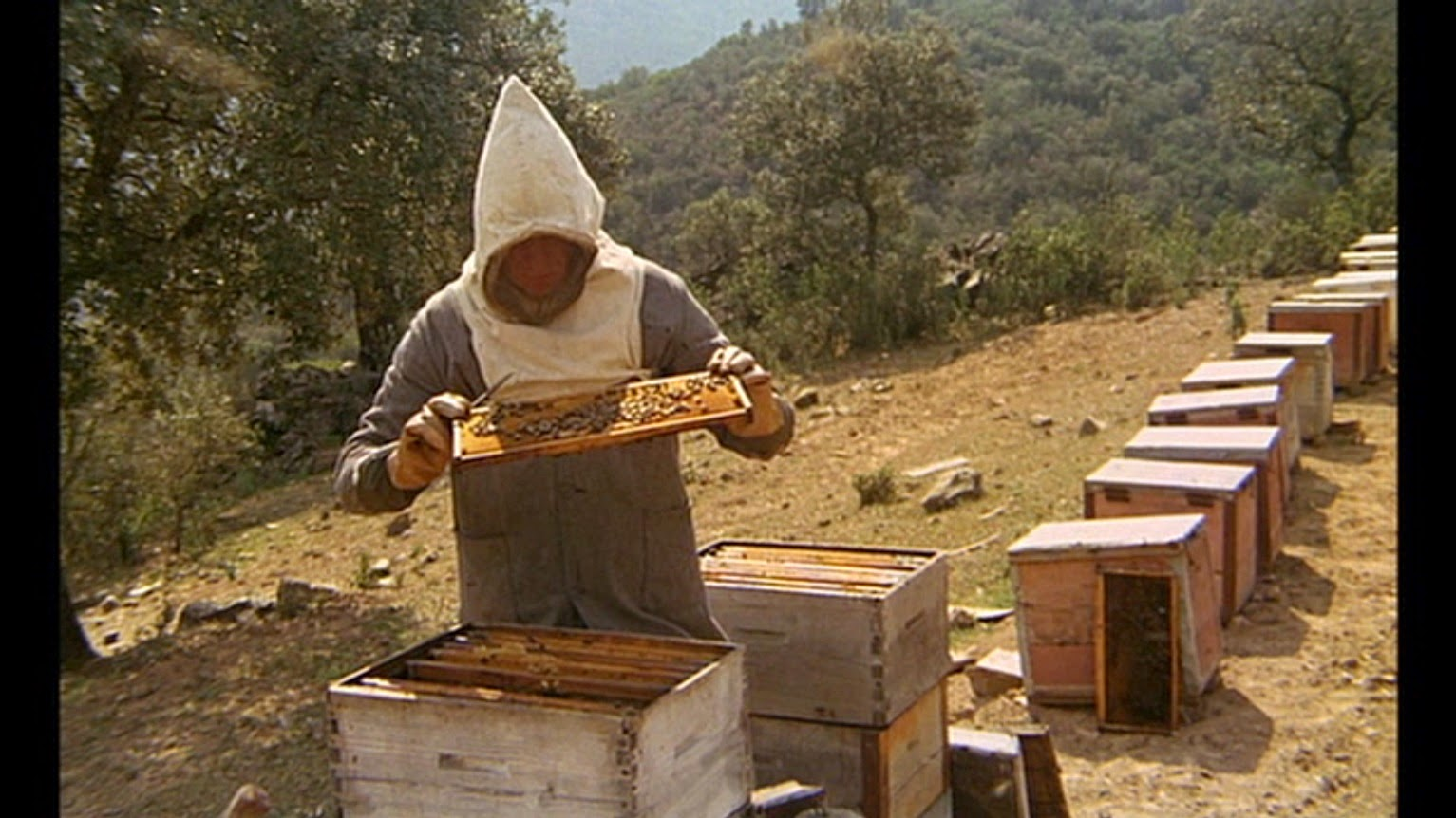 essay on beehive for a more in depth analysis here s an essay on the criterion page happyotter