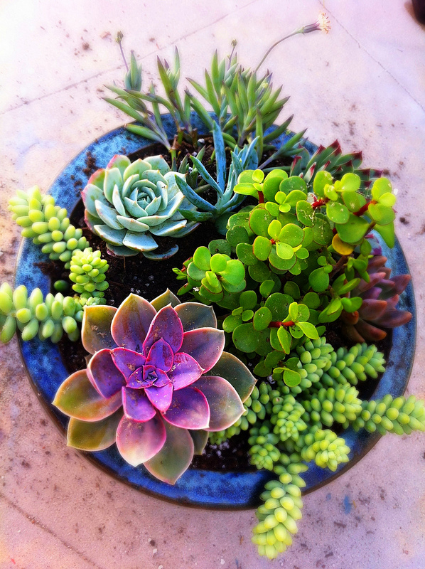 Stunning succulent gardens the cottage market for How to make an indoor succulent garden
