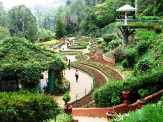 Ooty (Best Honeymoon Destinations In India) 8