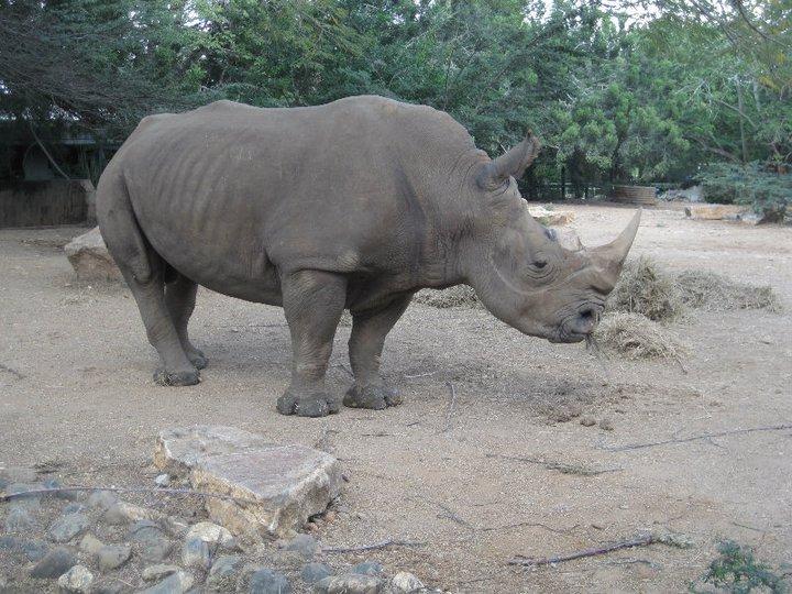 zoologico mundo animal: