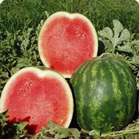 Cara memilih semangka terbaik