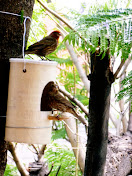 Make a Bird Feeder Recycling