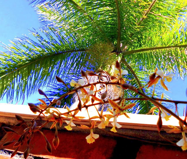 Palmera Real y orquidea