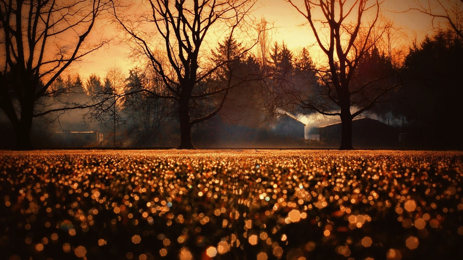 Wonderful Wallpaper Halloween Landscape - Yellow-Sunset-Dry-Trees-Hexegon-Bokeh-Lights-Awesome-Photography-HD-Wallpaper--NatureWallBase  Picture_32121.jpg