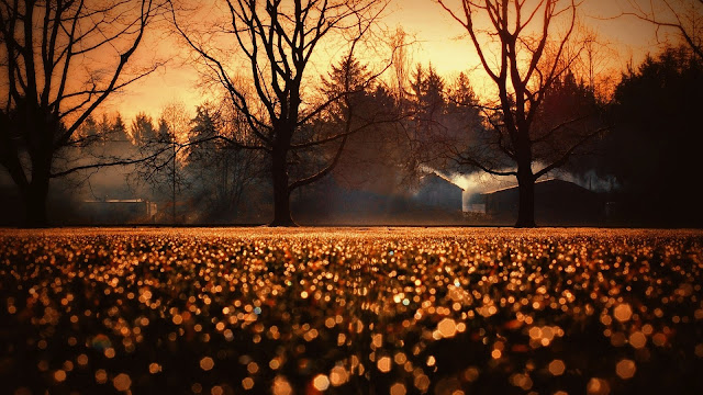 Yellow Tones Sunset Dry Trees Cottages Hexagon Bokeh Lights Photography HD Wallpaper