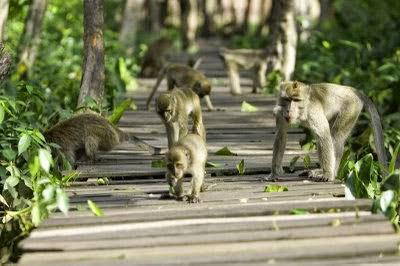Pulau Kembang : Tempat wisata di banjarmasin yang terkenal
