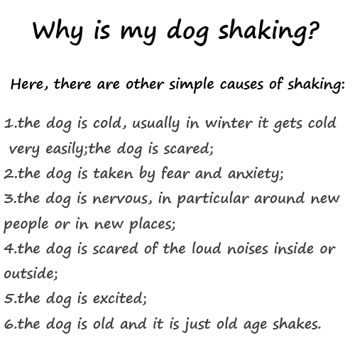 1Betterof: Why is my dog shaking