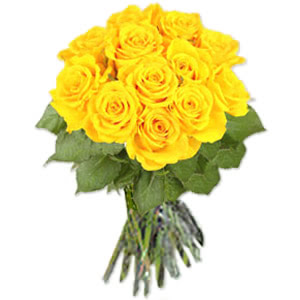 12 yellow roses 256 p