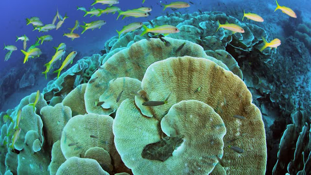 Colourful diving in Papua New Guinea