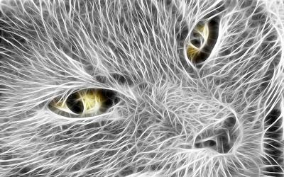 white-cat-animal-wallpaper-desktop-background