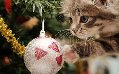 Gatito mirando las esferas en el arbol de Navidad