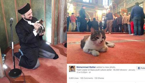 Masjid Kucing di Turki
