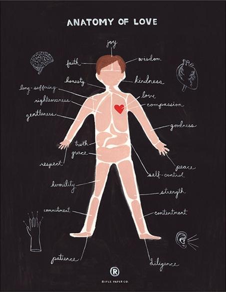 I love anatomy