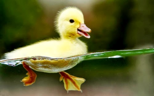 Duck Paddle