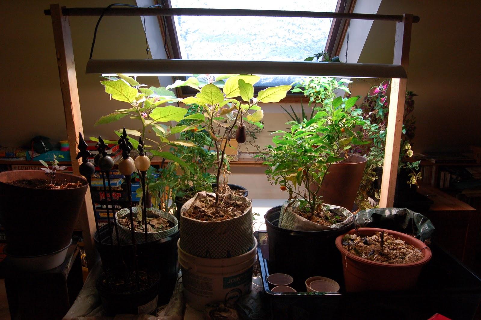 3 jardins au qu bec pour l 39 hiver pourquoi ne pas inviter quelques l gumes l 39 int rieur. Black Bedroom Furniture Sets. Home Design Ideas