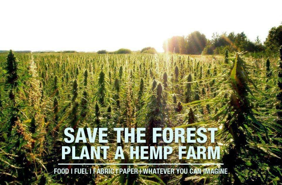 save-forest-plant-hemp-farm.jpg