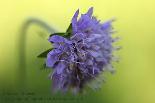 macro fleur bourgogne