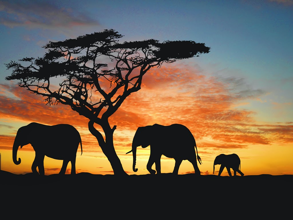 olifant.ik ben geen armbandje