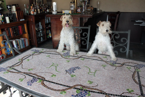 Wire fox terriers at a pub