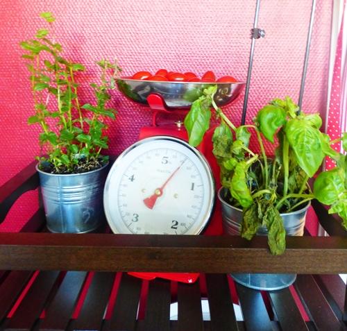Küche Kitchen Küchenwaage Kräuter Rot Red