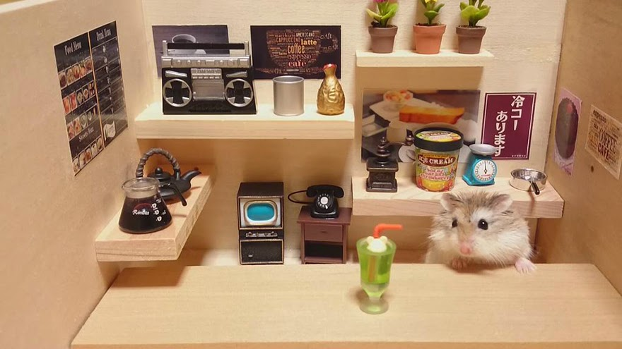 Cute tiny hamsters running their own businesses (19 pics), hamster serving drink and food, hamster with miniature store
