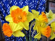 Des fleurs de printemps jonquilles